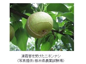 アサヒグループHD、関西大発VBのKUREi社に資本参加。コーヒー粕で農作物の凍霜害防止材開発