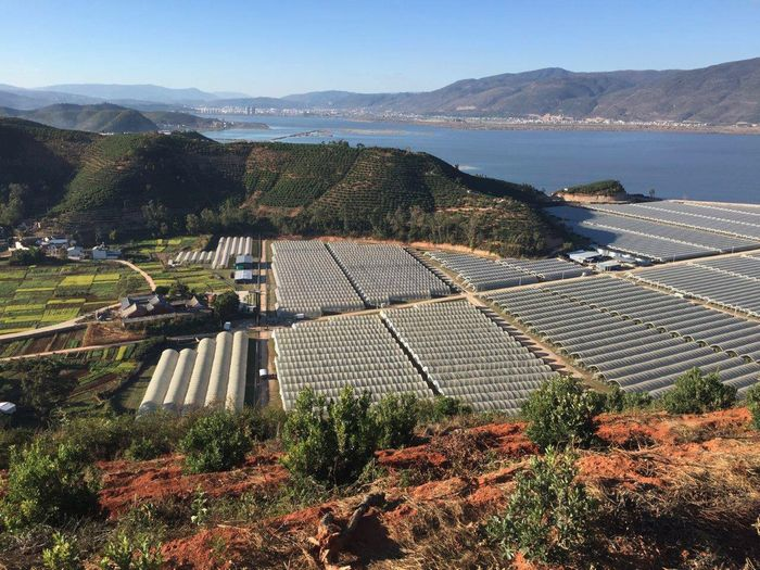 野菜・果物の大手、オーストラリアのコスタ・グループ『半期利益が75%減』今後は追加投資による成果も