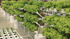 インドの社会起業家「ソーシャルアントレプレナー」ハイデラバードの屋上に多段式の水耕ファームを開設