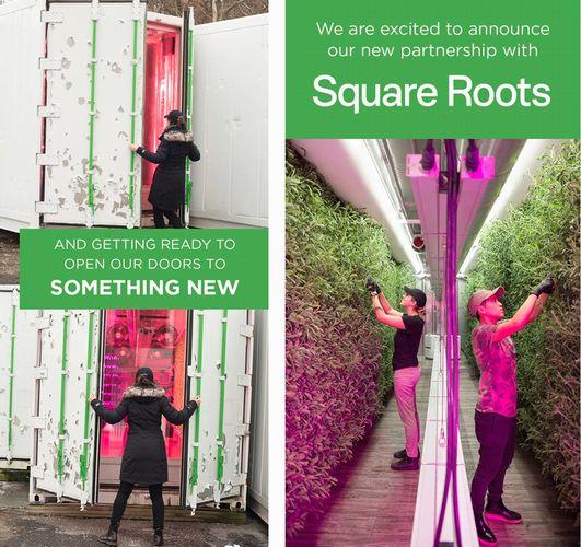 食品流通大手とSquare Roots社が連携。物流拠点に植物工場を建設&起業家支援へ