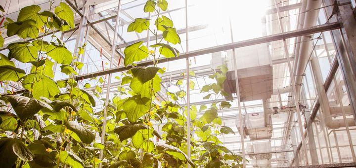 オーストラリアの施設園芸・植物工場の市場規模は1,400億円。2023年には4倍以上の市場拡大へ