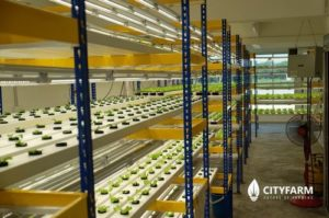 マレーシア、海外企業による農業ビジネスを対象とした専門機関の設立