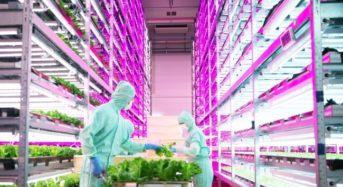 MIRAIと千代田化工建設、植物工場にて業務提携。海外の現地環境にマッチした設備開発・販売加速へ