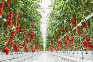 コスメ・ヘアケア業界の億万長者、カナダの植物工場・生産者と連携