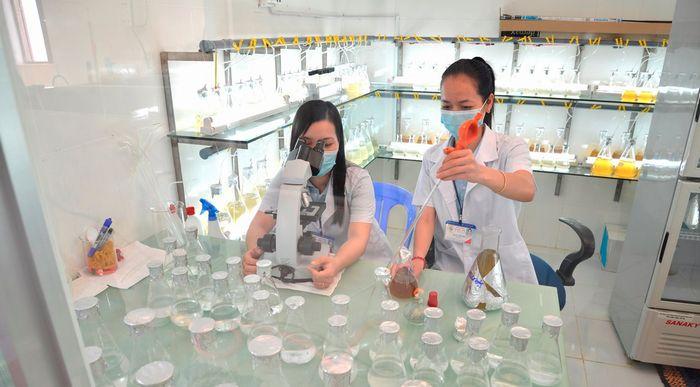 ベトナムのエビ養殖大手が環境配慮・植物工場型の巨大施設をオープン。稚魚の国内市場を独占