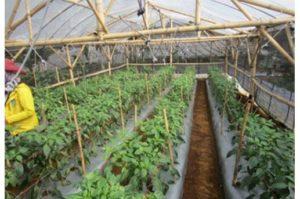 アサヒグループHD「ビール酵母細胞壁」を用いた農業資材を開発途上国で活用・JICAとも連携