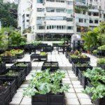 香港にて屋上ファームが拡大。60カ所以上のファームが存在、スタバなどの民間企業も参加