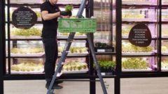 ドイツのスーパーEdeka、インファーム社による店舗併設型の植物工場モデルを加速