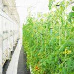 みずほ情報総研、太陽光利用型植物工場のコンサルティング「農援隊」へ出資