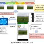NTTデータなど、AIと画像解析技術活用の「生育診断」ソリューションなどの試行サービスを開始