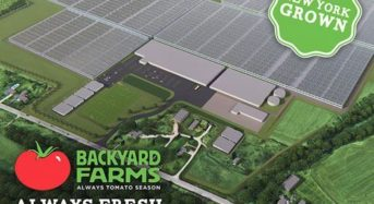 『Backyard Farms』ブランドの植物工場トマトを大都市ニューヨークへ。約29haの巨大施設が建設中