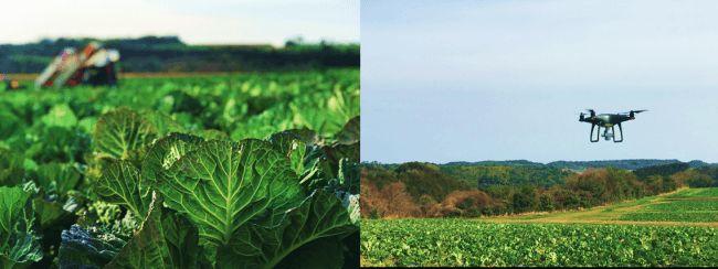 キューサイ、NTTドコモと連携。青汁原料ケールの自社農場にドローンを活用