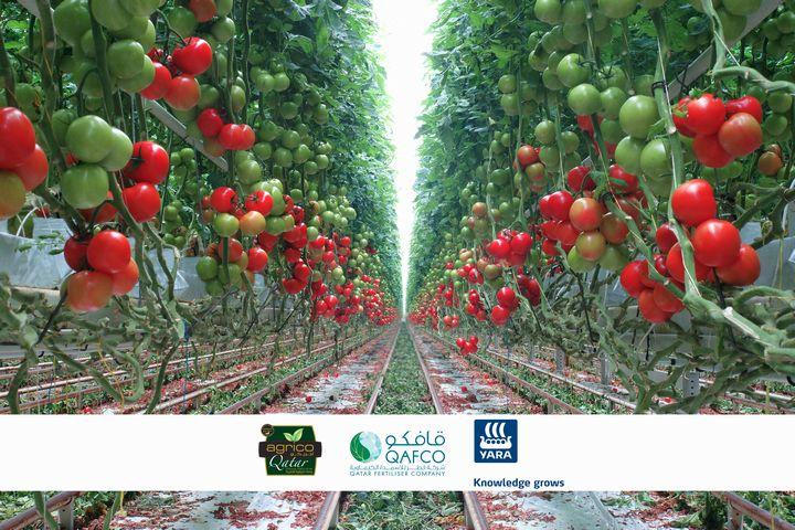 カタールの植物工場ベンチャーと肥料メーカーが連携。技術実証センターにて人材育成を実施