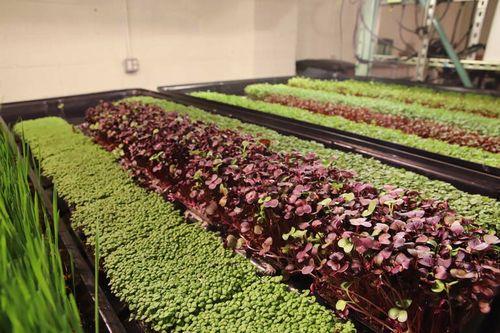 自閉症を支援する米国ニュージャージー州のNPO団体、完全人工光型植物工場による野菜の生産を開始