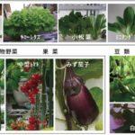 エネショウ、農福連携型の植物工場を福祉施設にて実証。有機水耕による果菜類の生産も