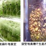 キリンHDと農研機構種苗管理センター、ジャガイモを植物工場のような形で大量増殖する技術を提供