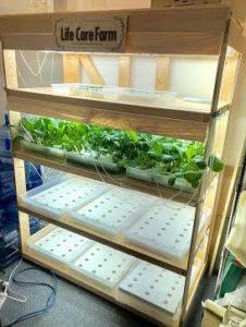 ヒューマンライフケア、介護施設で植物工場キットを活用した「水耕栽培プロジェクト」を開始