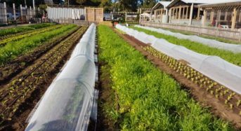 韓国の都市型農園、3年前より30%増加。参加者は50万人を超える