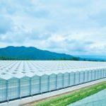 サラダボウル、NTT東日本と太陽光利用型植物工場のソリューション開発に向け協業へ