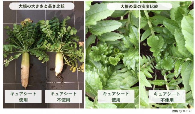 和紙を使った土壌改良『キュアシート』2ヶ月で販売件数1,000個を突破