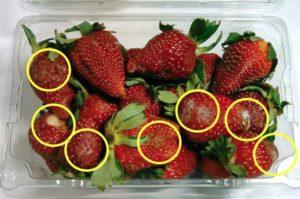 米国の生鮮野菜調査。商品の50%が消費期限より早く傷みが発生・多くの消費者が不満を持つ結果に