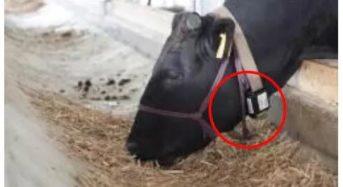 ダイエーグループ、牛の行動分析システム「U-motion」を本格導入