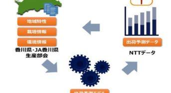 NTTデータとJSOL、ブロッコリーの出荷予測モデルを開発・実証開始