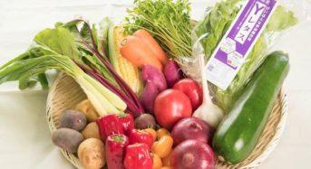 YASAI、京都府立大と共同で植物工場による高機能野菜を開発。廃校利用した施設が完成