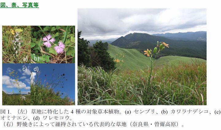 センブリ・カワラナデシコなど、日本で草地が10万年以上維持されてきたことを実証