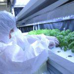 明治大学、小学生を対象に植物工場による体験型学習を8月6日に開催