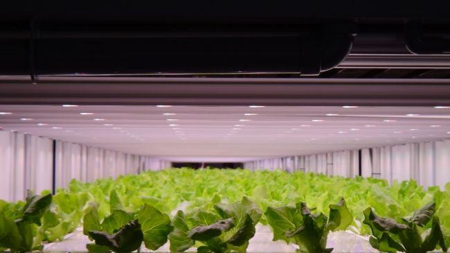 セブンイレブン向け・プライムデリカの植物工場。植物育成用LED照明「フィリップス グリーンパワーLED」が採用