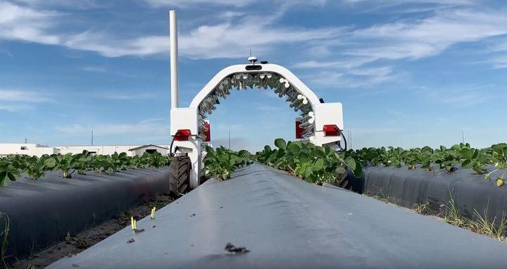 英国政府、ハイテク農業プジェクトへ約30億円を投資。イチゴの栽培管理・収穫自動ロボットの開発も