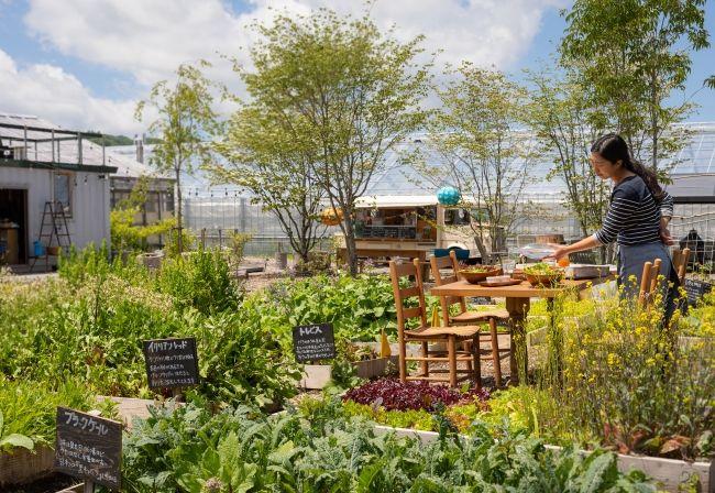 軽井沢マリオットホテル、農園での摘み取り体験とランチをセットにした宿泊プランを限定販売