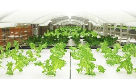 ⽇本アジア投資、植物工場プラント開発や独自ブランド野菜を生産する森久エンジニアリングへ投資