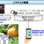 全国トップ150億円の産出額を誇る千葉県のニホンナシ。NTTデータ経営研究所などが病害予測システムを開発