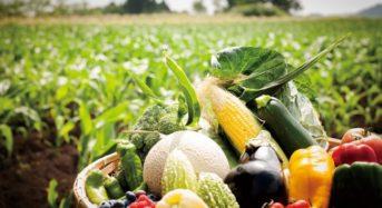 函館大沼プリンスホテル、広大な農場で夏野菜の収穫体験&産地直食