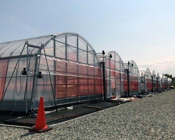 グリーンリバーと佐賀市、清掃工場の余熱とCO2を活用したバジル植物工場を7月に稼働