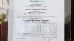 精密部品加工の大野精工、環境制御型の施設栽培トマト・イチゴ農場がグローバルGAP認証を取得