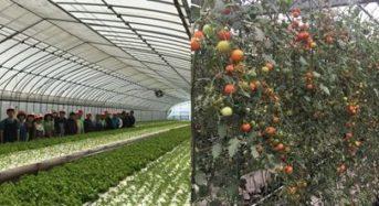 A型事業所として農福連携・障がい者雇用型ファームを運営する「てしお夢ふぁーむ」コーポレートロゴを刷新