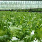 日本生物環境工学会、植物工場などによる「高機能野菜の生産」をテーマに講演会を開催(7月26日)