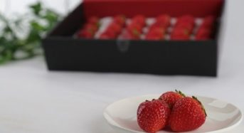 栃木の夏イチゴ、天空の高原いちご「奥日光なつおとめ」の販売開始
