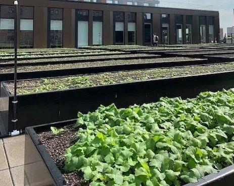 ニューヨーク・マンハッタン区にて2番目に大きな都市型農場Essex Farmがオープン
