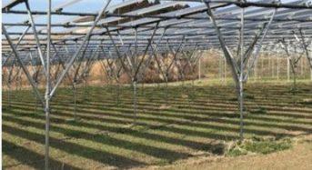 JXTG、営農型太陽光発電事業に取り組むベンチャー企業「アグリツリー」への出資