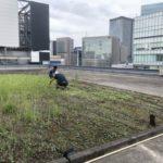 銀座ロフトが屋上でハーブ栽培。ロフトでの無農薬ハーブ販売や周辺地域の飲食店へ提供