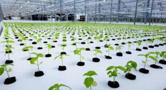 寒冷地型データセンターに国内最大規模のアクアポニクス型の植物工場が完成