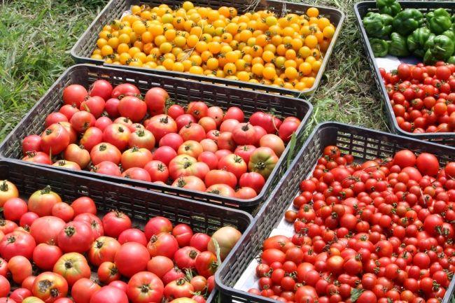 札幌パークホテル、自社農場にて農薬や肥料を使用しない自然栽培野菜を使用したパスタを期間限定で提供