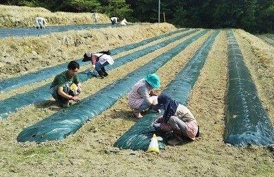 GM7による宮城県丸森町にて農業法人を設立。タピオカ原料のキャッサバや海外ニーズの高いリコリスなどを栽培
