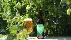 サンクトガーレン、乾燥処理しない生の国産ホップ「かいこがね」を使用したエール・ビールを限定販売
