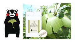 コイル、熊本県産イチョウ葉100%使用した高品質サプリを新発売
