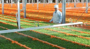 村上農園「野菜高騰を乗り切るレシピ特集」を公開。夏場の野菜価格が高騰する可能性も